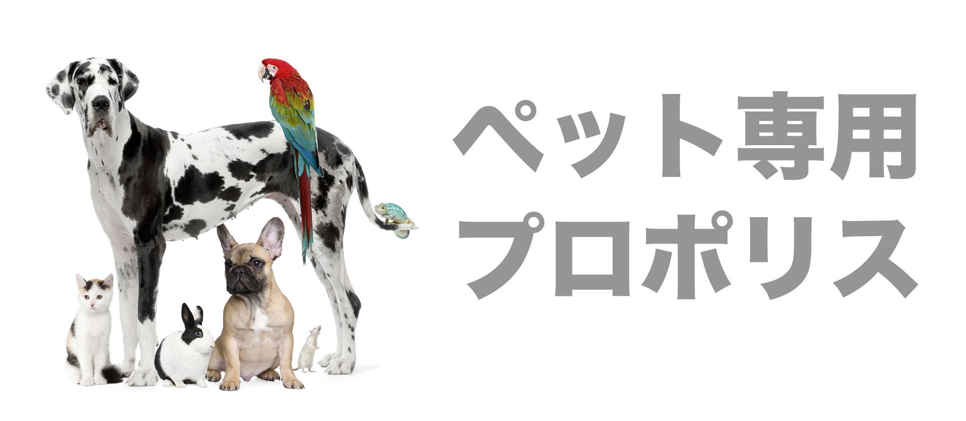 main_Pet